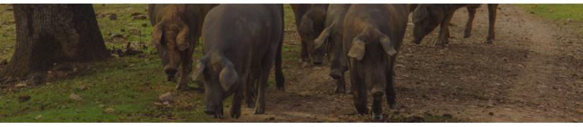 Cerdo Ibérico (Cárnicos) - Montanera de la Dehesa